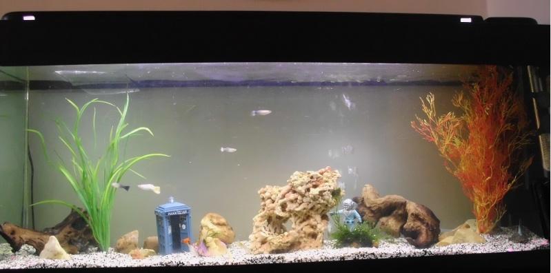 Mon petit aquarium de 120L :) Img_0112