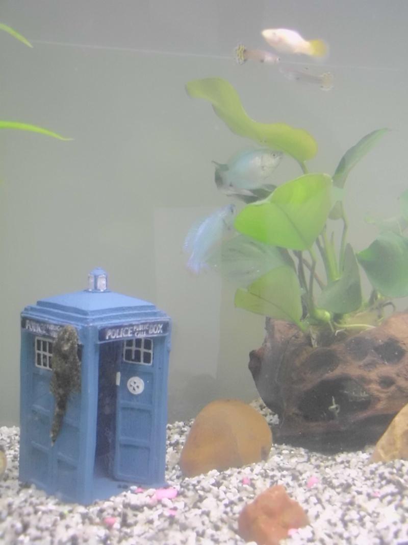 Mon petit aquarium de 120L :) Img_0114