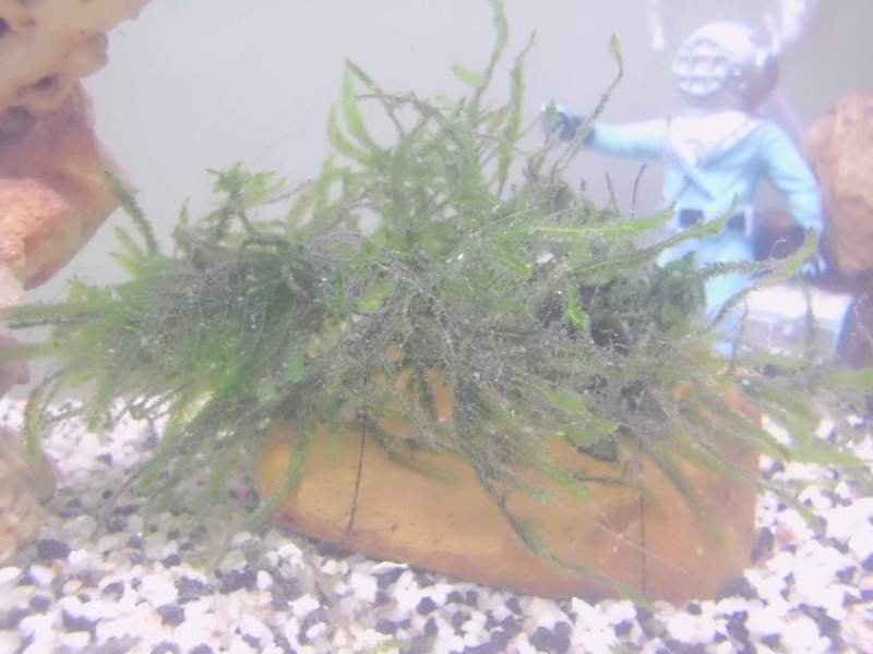 Mon petit aquarium de 120L :) Img_0115