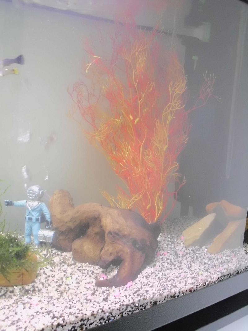 Mon petit aquarium de 120L :) Img_0116