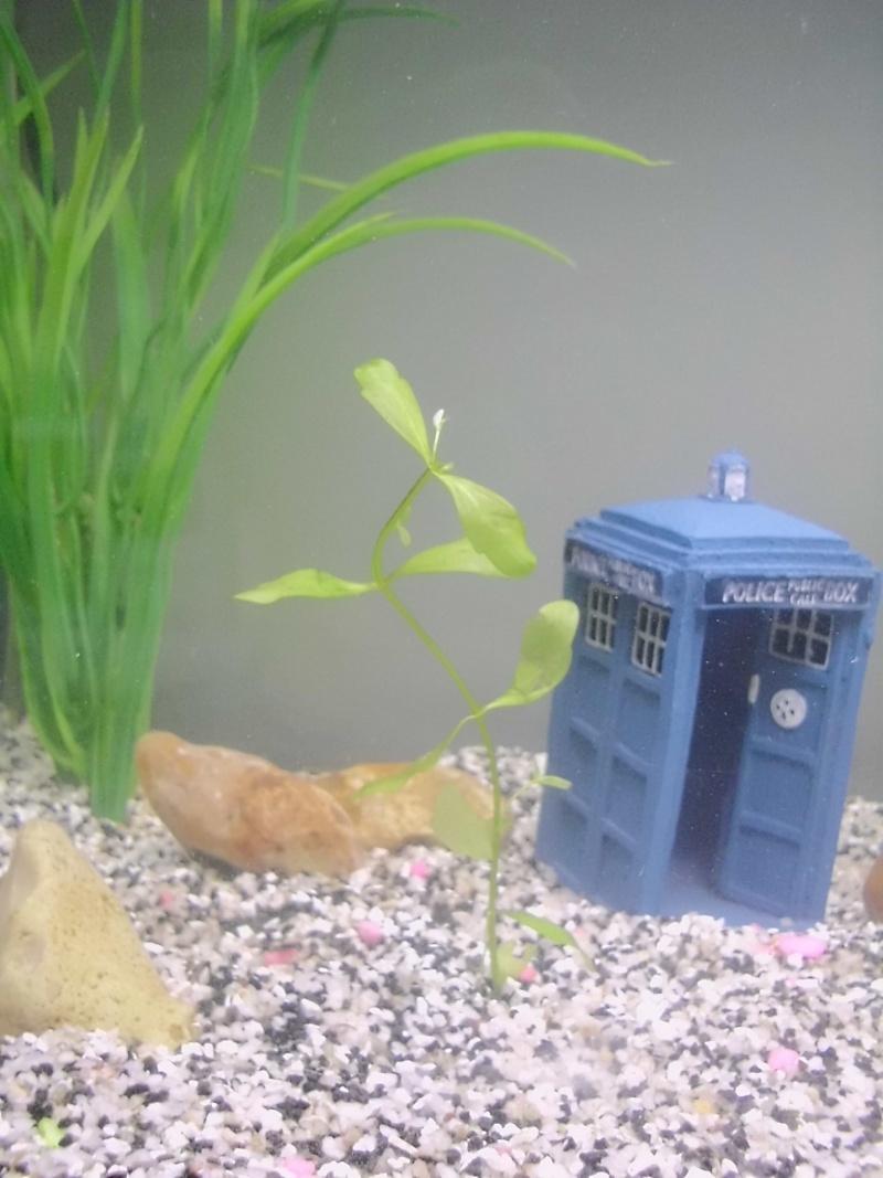 Mon petit aquarium de 120L :) Img_0119