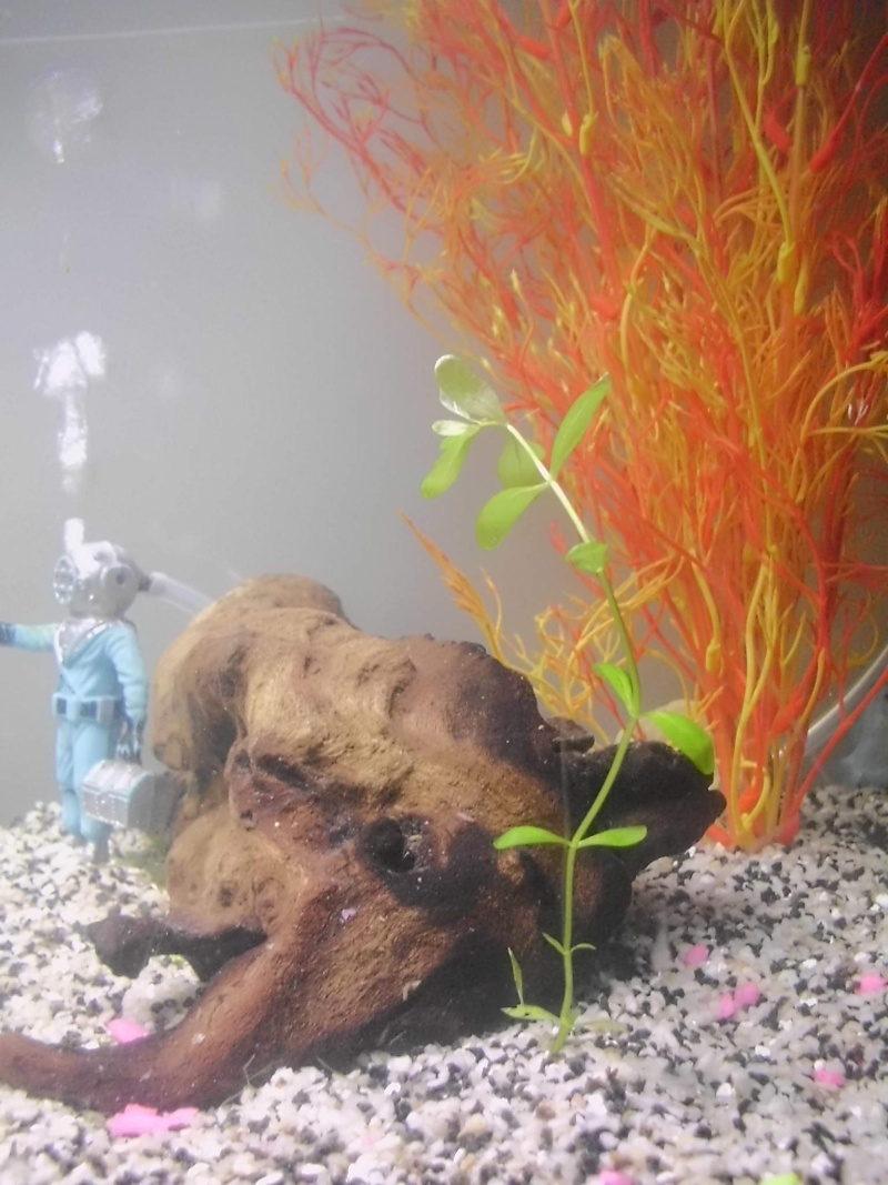 Mon petit aquarium de 120L :) Img_0120