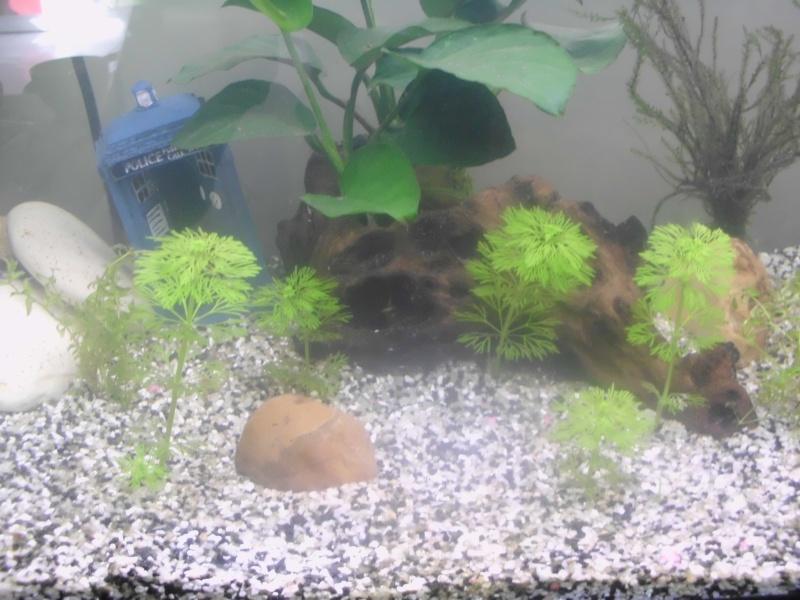 Mon petit aquarium de 120L :) Img_0311