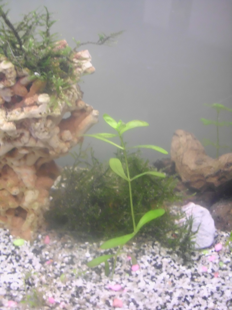 Mon petit aquarium de 120L :) Img_0312