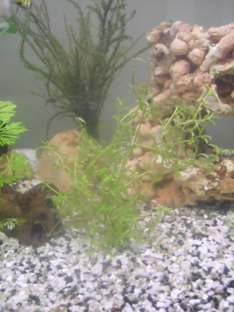 Mon petit aquarium de 120L :) Img_0313