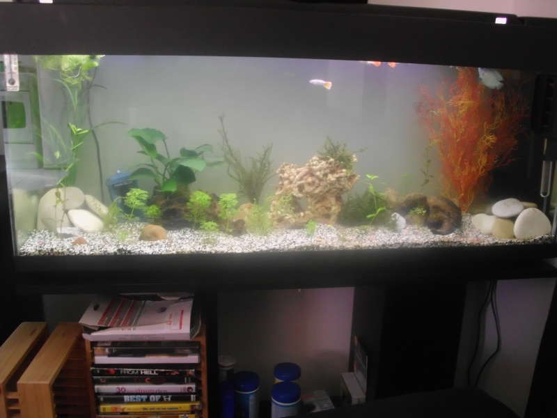 Mon petit aquarium de 120L :) Img_0314