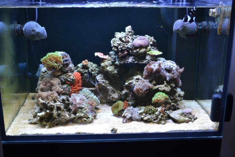 Trombinoscope des bacs en eau de mer Dsc_0710