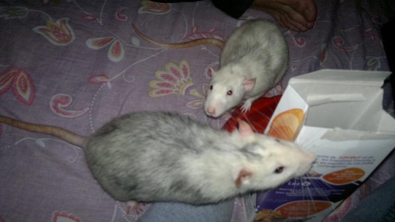 Locki et Mojito, en exclusivité internationale ! 2014-015