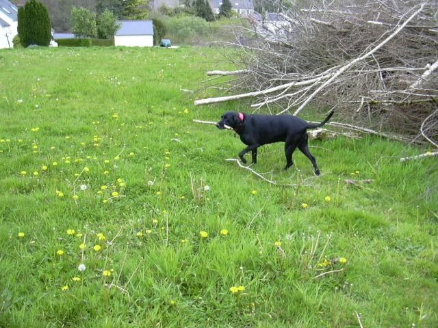 Besoin d'aide pour la diffusion des chiens Dscn0010