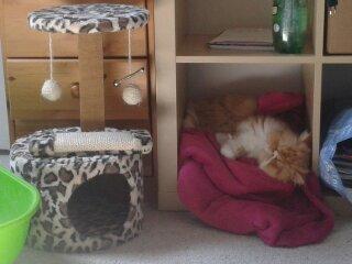 Nous avons adopter un chat persan male de 1 anssa fait  2 jours et il n'a toujours pas manger n'y bu 13992110