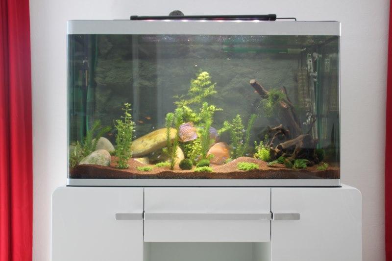 Mon Aquarium Img_2410