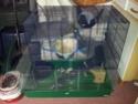 Idées sur l'aménagement de ma cage. 20140510