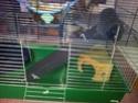Idées sur l'aménagement de ma cage. 20140511