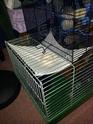 Idées sur l'aménagement de ma cage. 20140512