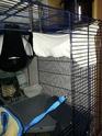 Idées sur l'aménagement de ma cage. 20140513