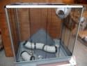Dépt 78 - Vends cage rat ETAT NEUF modèle Jenny de FERPLAST P1080713