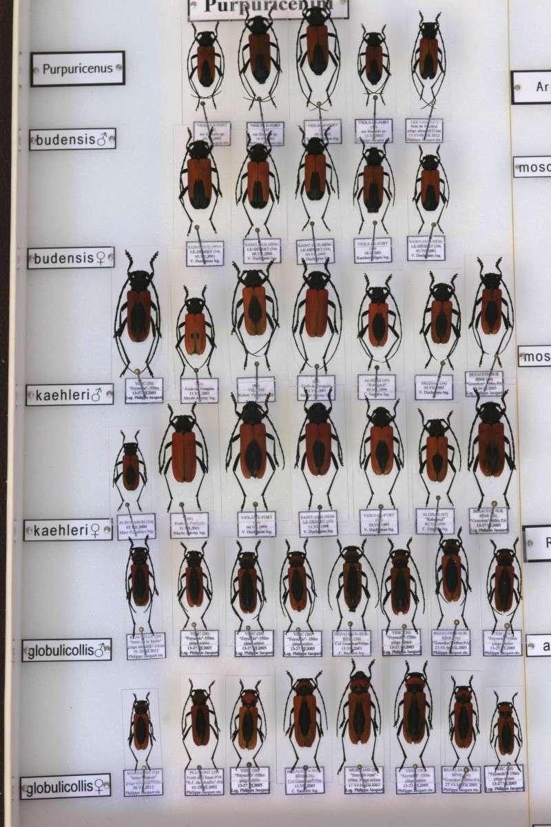 Présentation des collections Entomologiques - Page 7 Img_1013