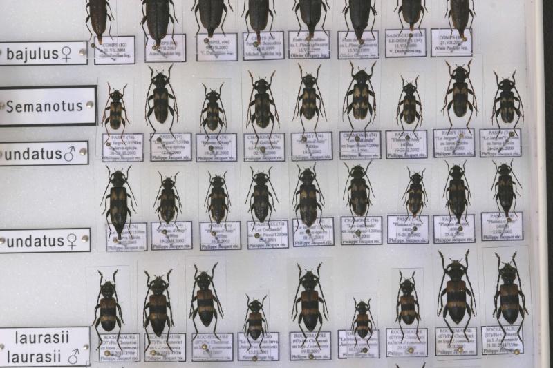 Présentation des collections Entomologiques - Page 7 Img_1014