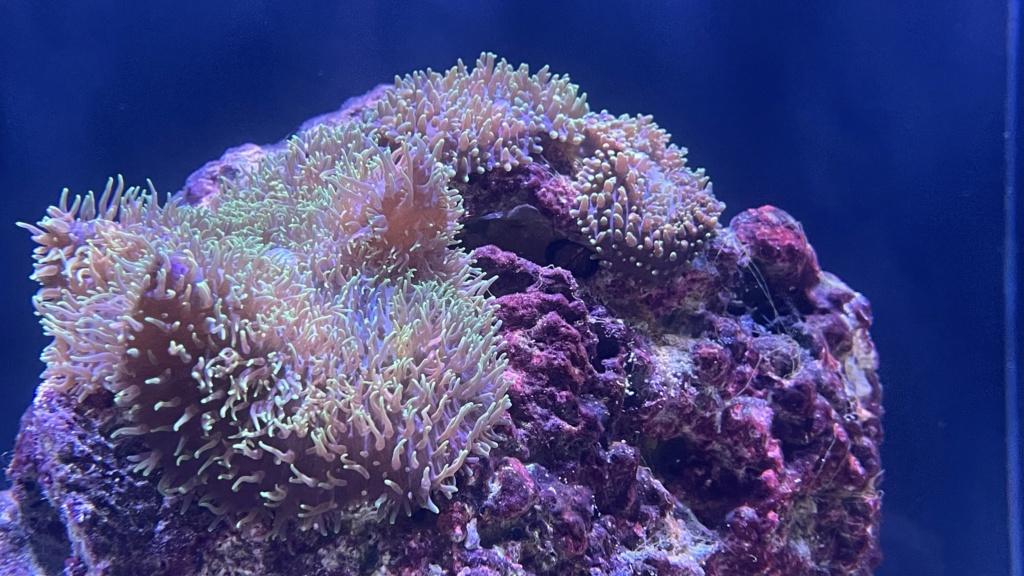 Présentation de mon Waterbox marine X 90.3 Image_10