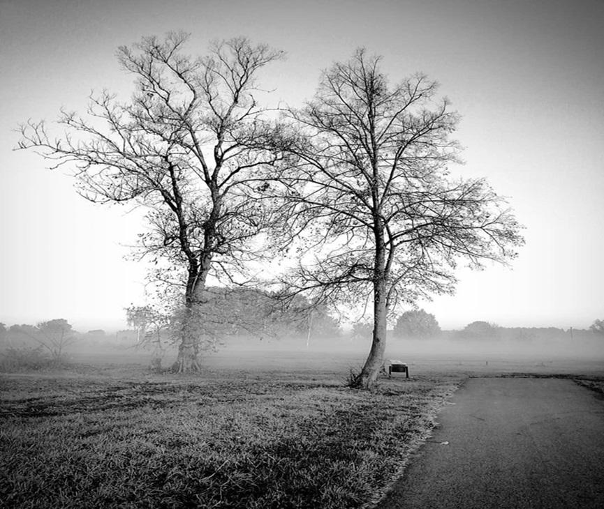 priroda u crno beloj boji - Page 24 73393210