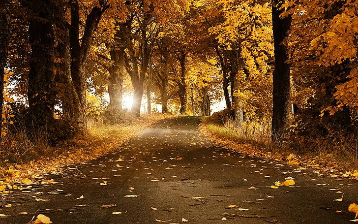 Jesen - Page 43 Autumn13