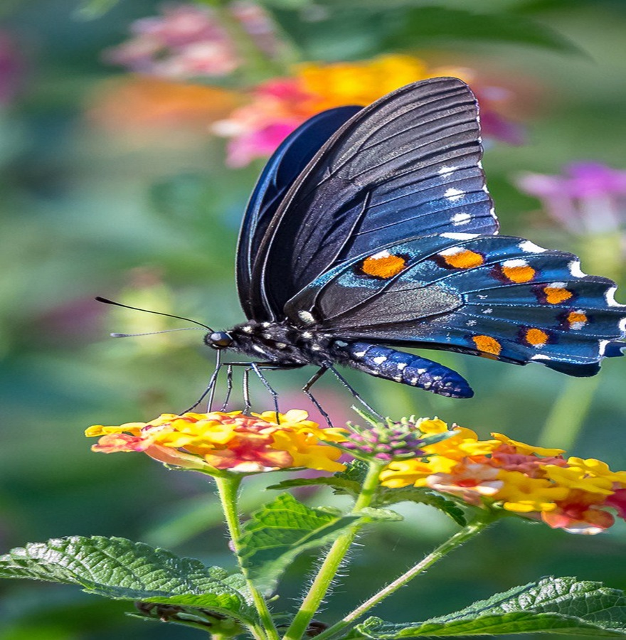 Leptiri i ostali insekti D5nfdg10