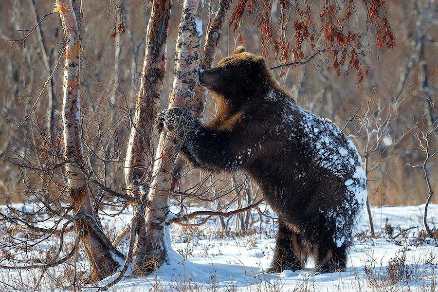 Divlje životinje D5zp6u10