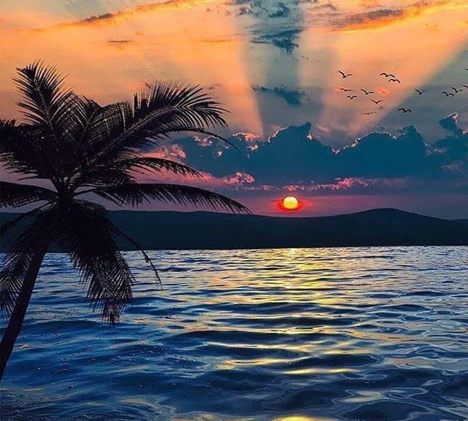 More,jezero,reka...plaža,palma... - Page 32 D6ik5610