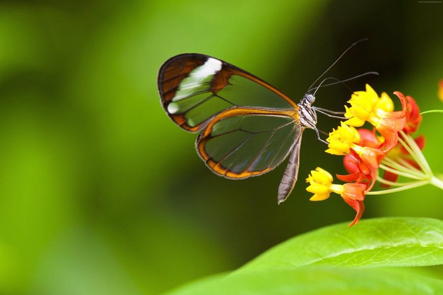 Leptiri i ostali insekti - Page 3 D8crhl10
