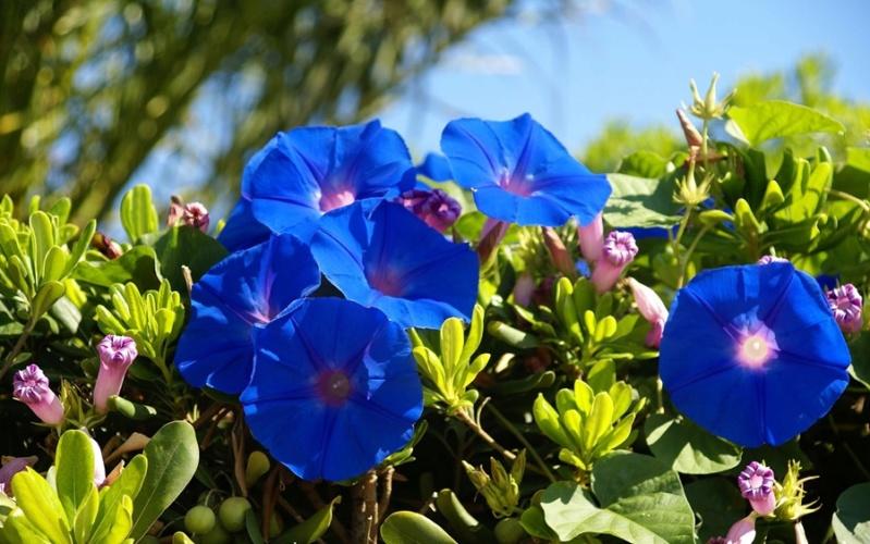 Cveće - Page 31 D9pjr_10