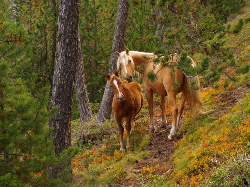 Konji vrani.. - Page 2 D_x2sy10