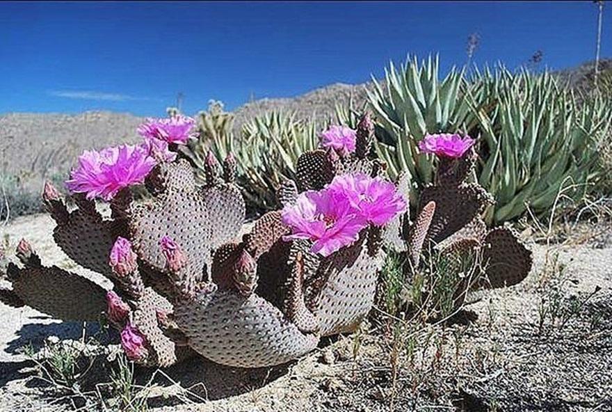 Kaktusi - Page 36 Dkugcj10