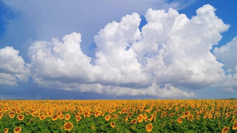 Suncokreti-sunflowers - Page 33 Eaj5sb10