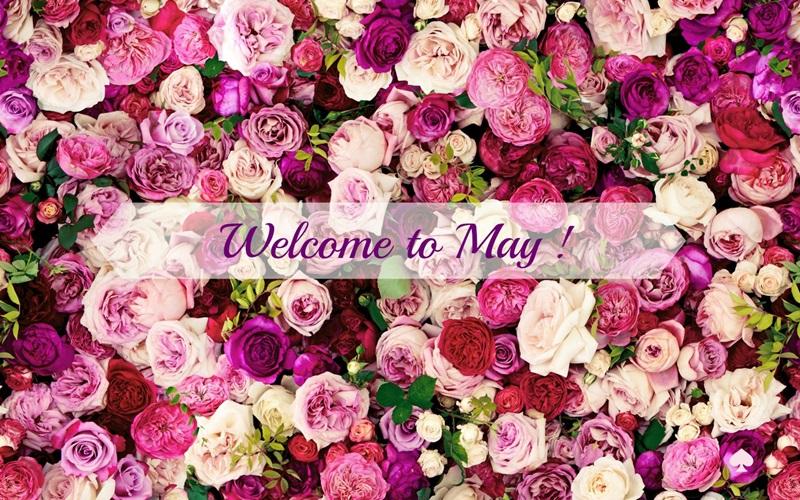 hello maj Maj_gr10