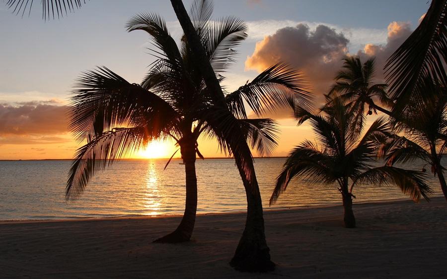 More,jezero,reka...plaža,palma... - Page 34 Palm-t10