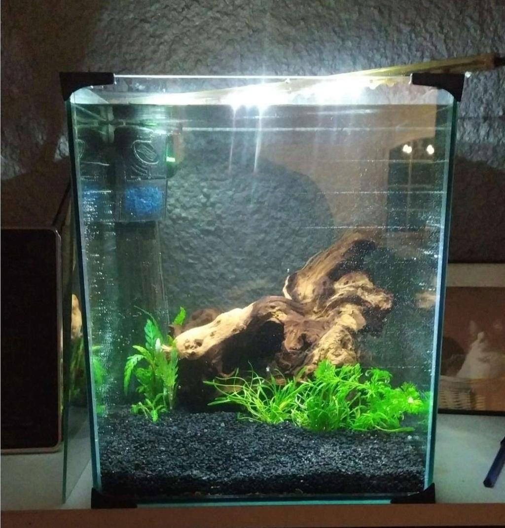 """[Nano] """"Aquascaping"""" et crevettes Img_2010"""