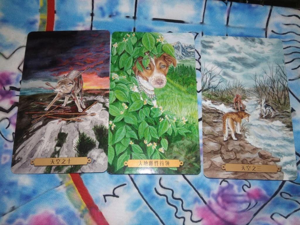 Акция на Таро Мистических Кошек и Собак) 0-02-205