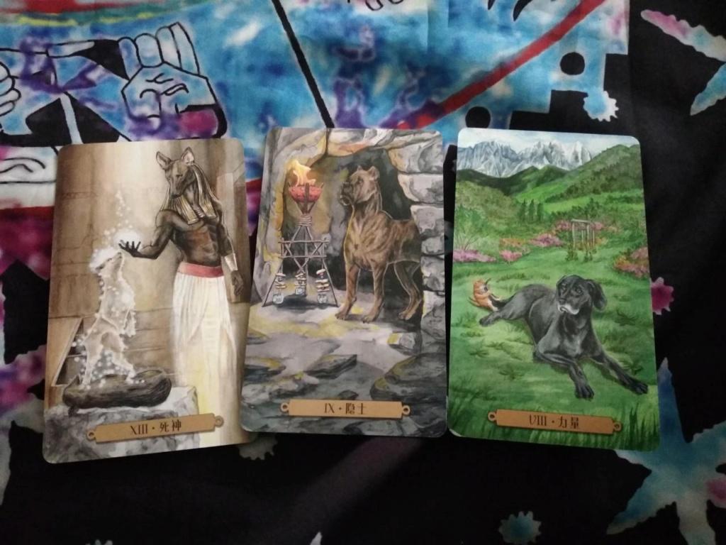 Акция на Таро Мистических Кошек и Собак) 0-02-210