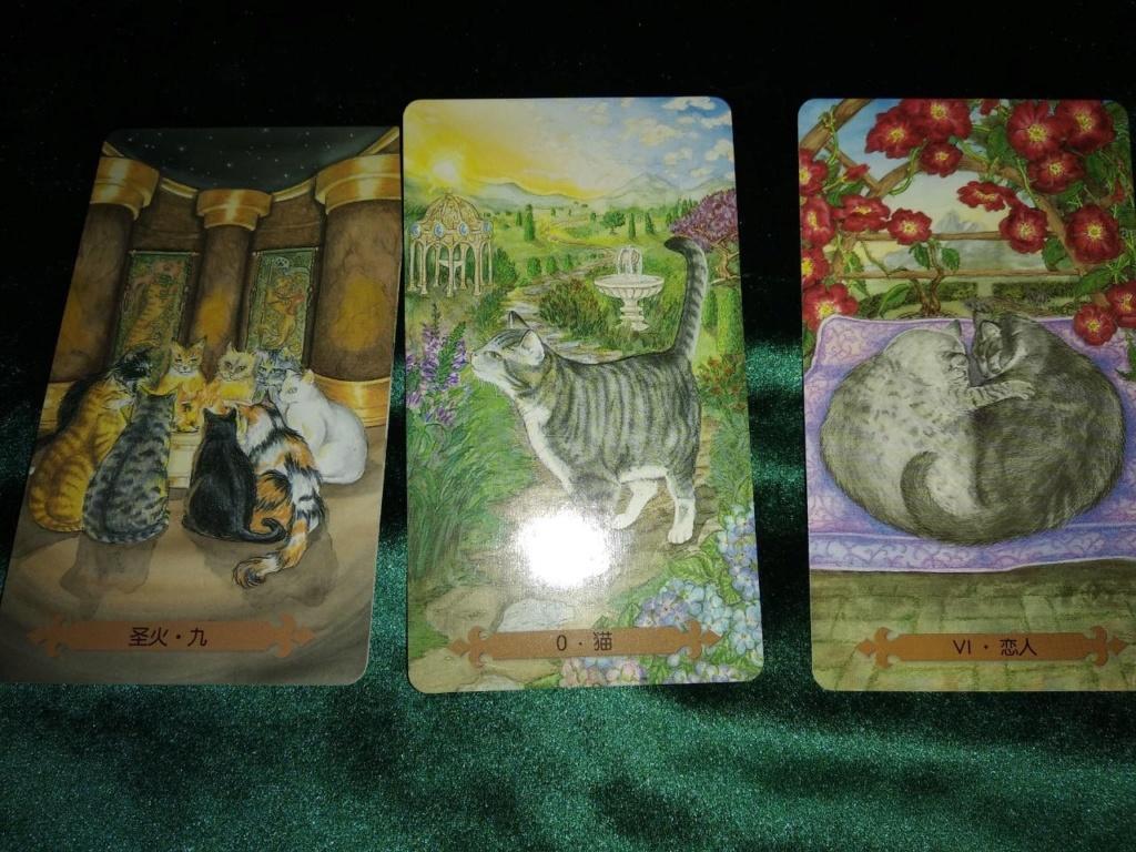 Акция на Таро Мистических Кошек и Собак) - Страница 4 0-02-223
