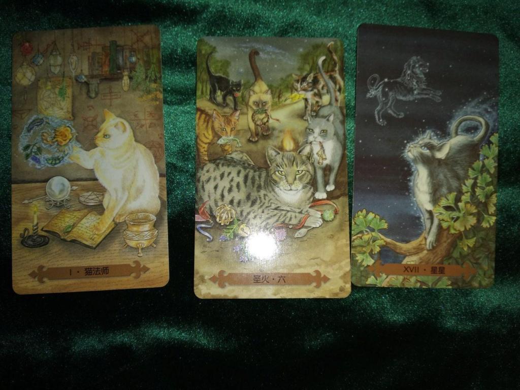 Акция на Таро Мистических Кошек и Собак) - Страница 4 0-02-225