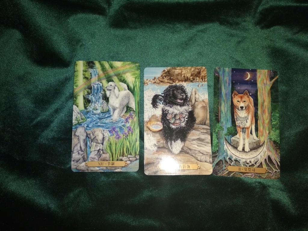 Акция на Таро Мистических Кошек и Собак) - Страница 4 0-02-229