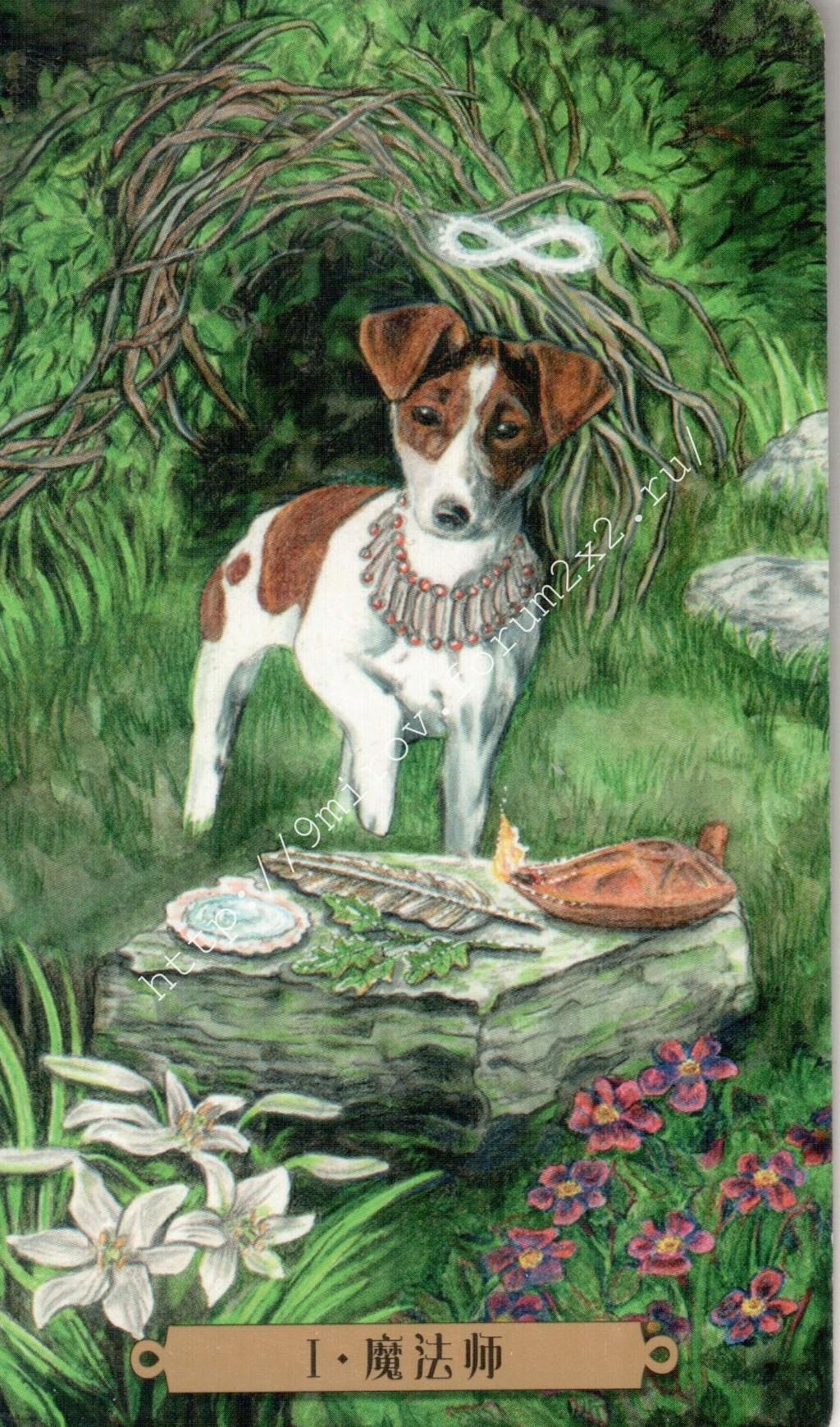 Таро мистических собак. Галерея. (китайская версия) Water174