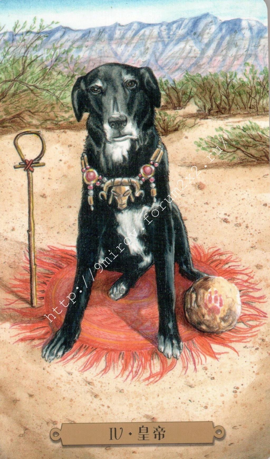 Таро мистических собак. Галерея. (китайская версия) Water177