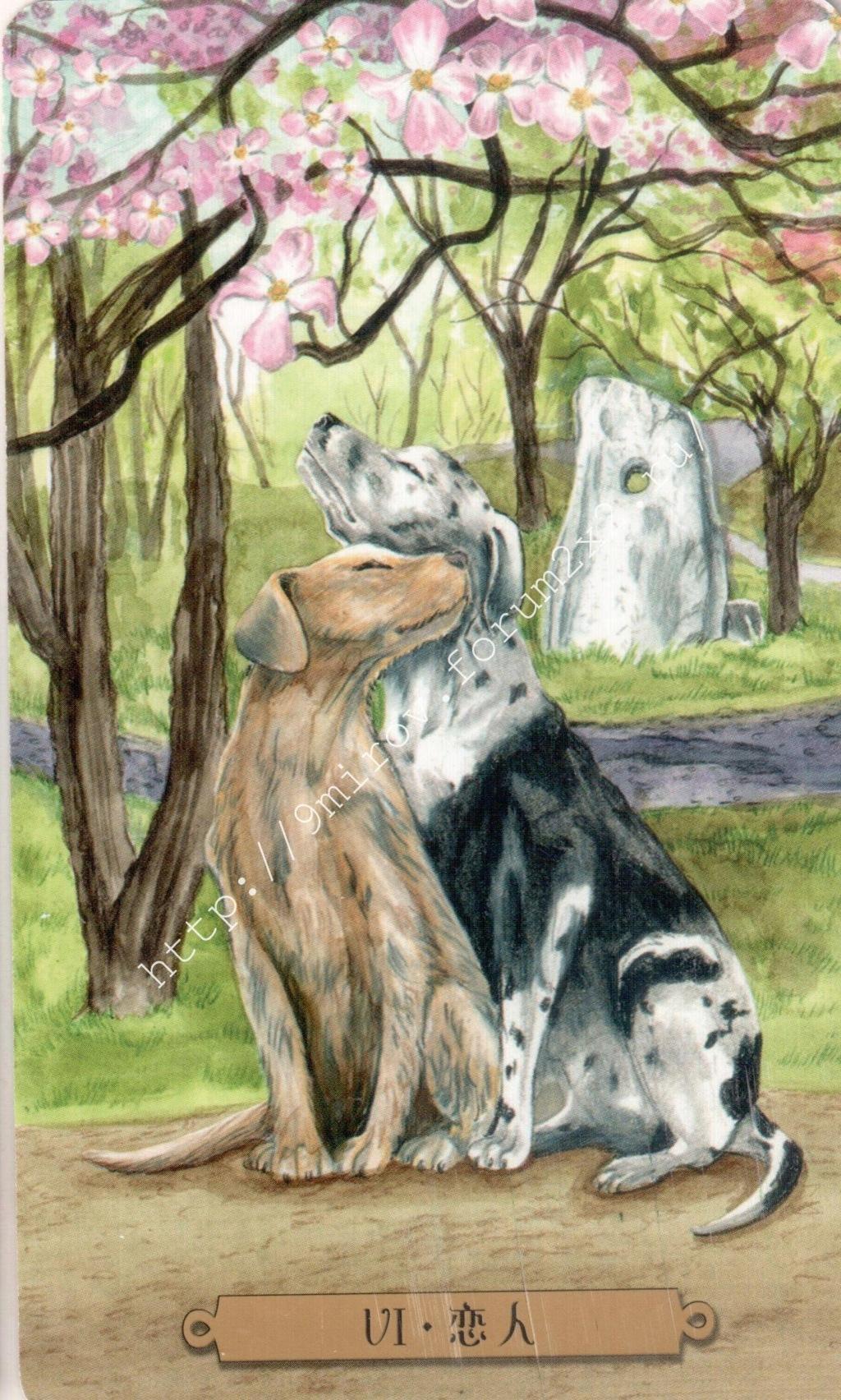 Таро мистических собак. Галерея. (китайская версия) Water179