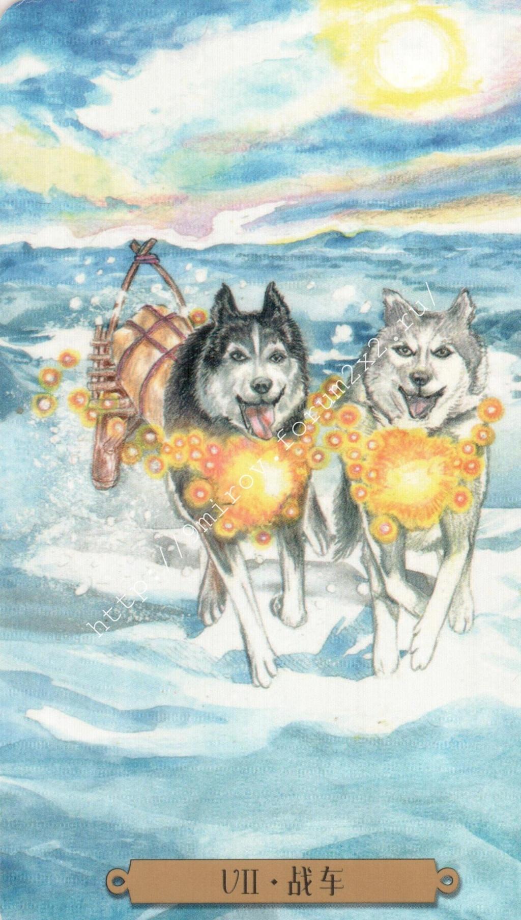 Таро мистических собак. Галерея. (китайская версия) Water180