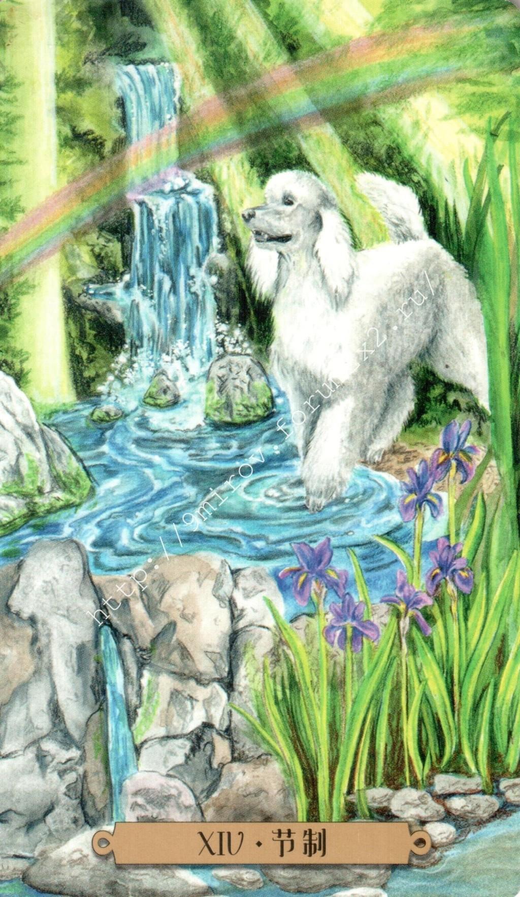 Таро мистических собак. Галерея. (китайская версия) Water187