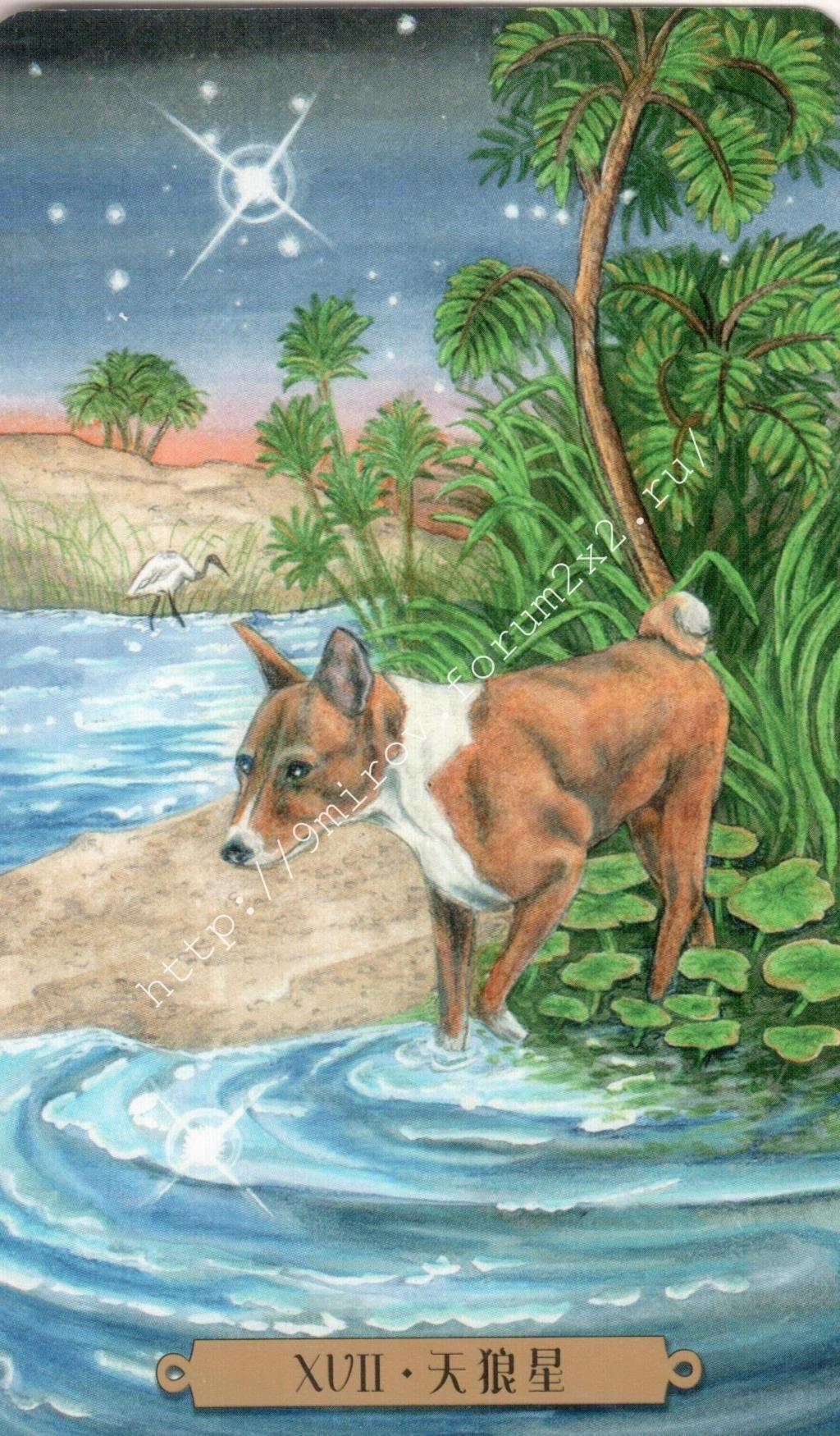 Таро мистических собак. Галерея. (китайская версия) Water190