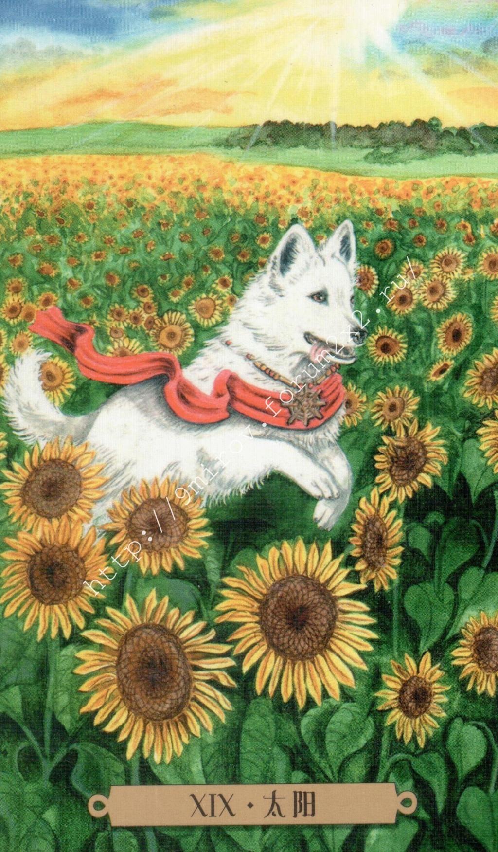 Таро мистических собак. Галерея. (китайская версия) Water192