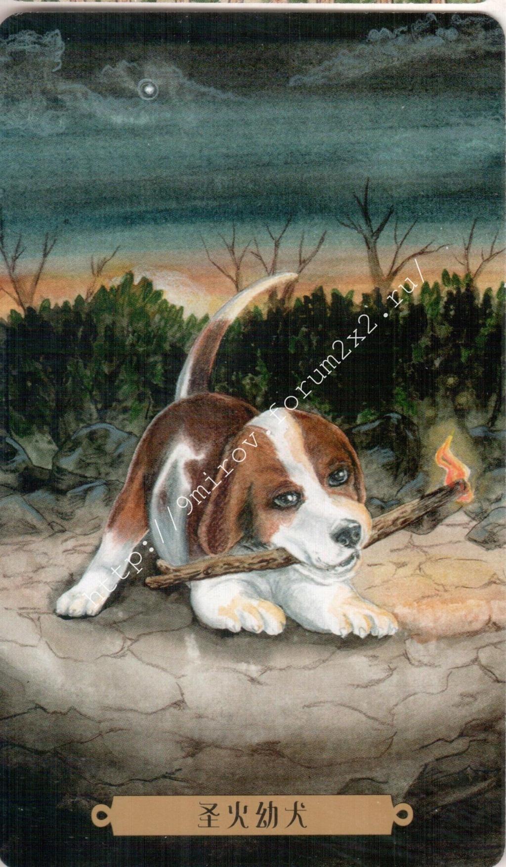Таро мистических собак. Галерея. (китайская версия) Water205