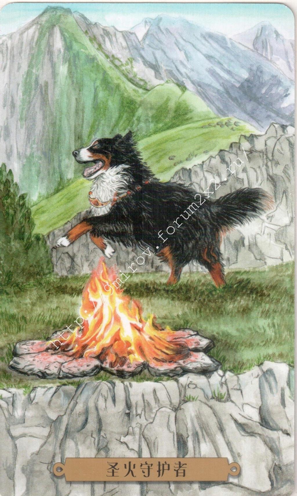 Таро мистических собак. Галерея. (китайская версия) Water206